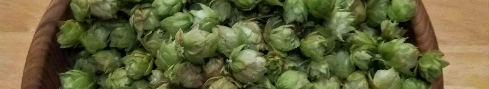 Perle harvesting and brewing with fresh hops